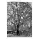 Árbol viejo en el patio trasero de la abuela tarjetas