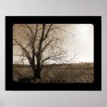 Árbol viejo en invierno impresiones