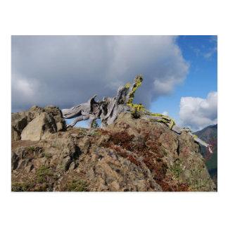 árbol viejo en una montaña postal