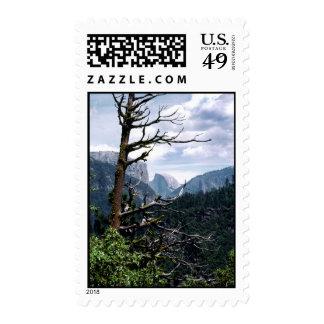 Árbol viejo en Yosemite