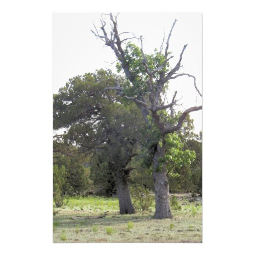 Árbol viejo Gnarly Papeleria