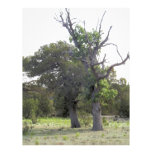 Árbol viejo Gnarly Plantillas De Membrete