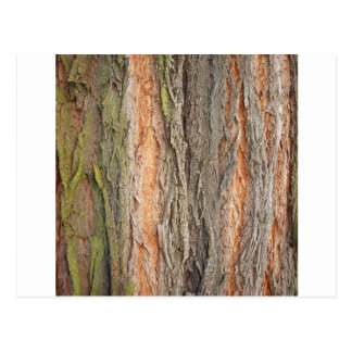 árbol viejo tarjeta postal
