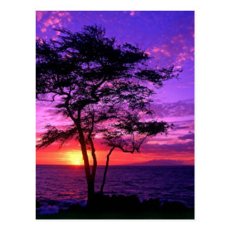 Árbol violeta y rosado de la puesta del sol postales
