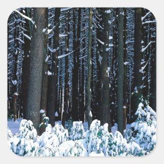 Árbol White Pine del este Pocono Etiquetas