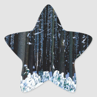 Árbol White Pine del este Pocono Calcomanías Forma De Estrellas