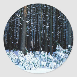 Árbol White Pine del este Pocono Pegatinas Redondas
