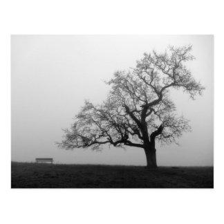 Árbol y banco en niebla postal