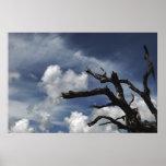 Árbol y cielo poster