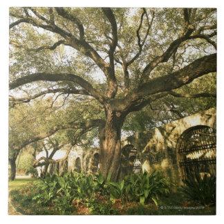 Árbol y el ajardinar en San Antonio, Tejas