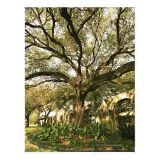 Árbol y el ajardinar en San Antonio, Tejas Postal