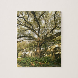 Árbol y el ajardinar en San Antonio, Tejas Rompecabeza