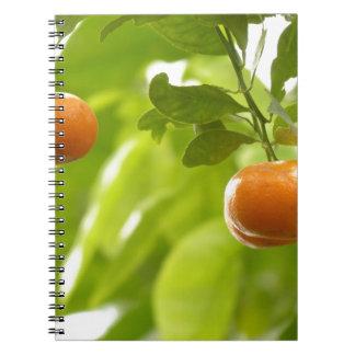 Árbol y frutas de mandarín cuaderno