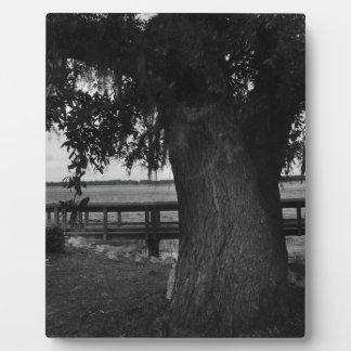 Árbol y muelle por el agua placas con fotos
