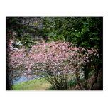 Árbol y narcisos rosados postal