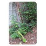 Árbol y verdor al lado de la cala de SLO Iman De Vinilo