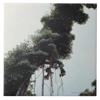 Árbol y vides elevados en selva azulejos cerámicos