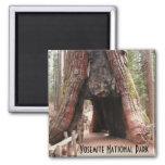 Árbol Yosemite del túnel Imán Cuadrado