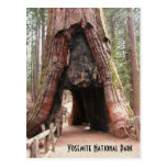 Árbol Yosemite del túnel Tarjeta Postal