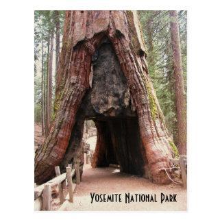 Árbol Yosemite del túnel Tarjetas Postales