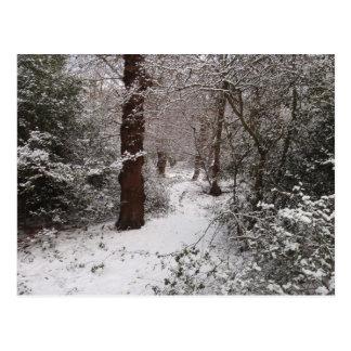 Arbolado antiguo nevado tarjeta postal
