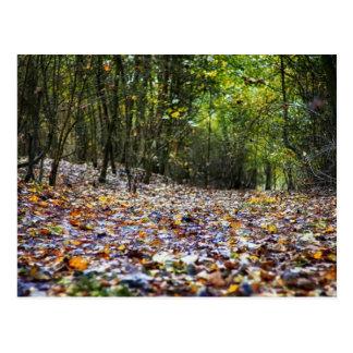 Arbolado del otoño postales