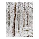 Arbolados Nevado Pocono Postal