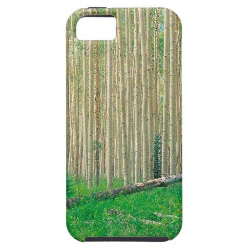 Arboleda Colorado de Aspen del árbol iPhone 5 Carcasa