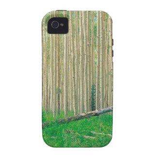 Arboleda Colorado de Aspen del árbol Vibe iPhone 4 Fundas