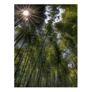 Arboleda de bambú de Arashiyama - Kyoto, Japón Tarjetas Postales