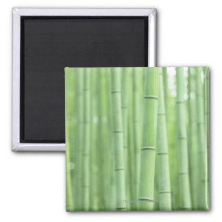 Arboleda de bambú imán cuadrado