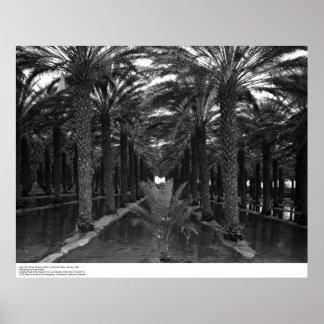 Arboleda de la palma datilera durante Irrigation,  Impresiones