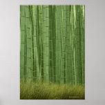 Arboleda de los árboles de bambú impresiones