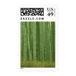 Arboleda de los árboles de bambú franqueo