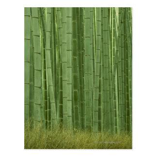 Arboleda de los árboles de bambú postal