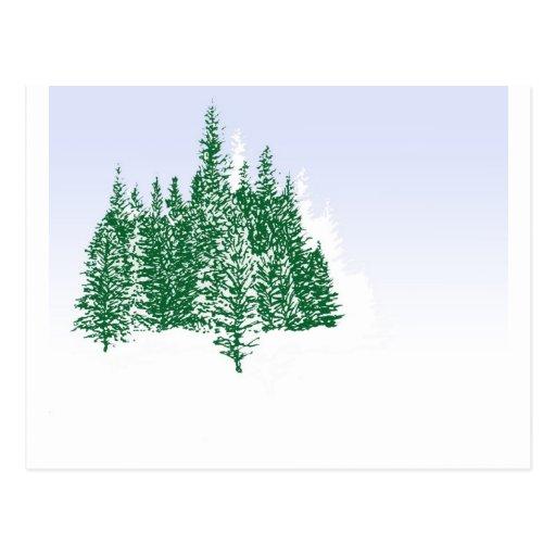Arboleda del pino del invierno postales