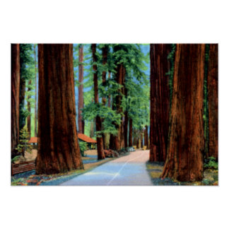 Arboleda el condado de Humboldt de Eureka Californ Póster