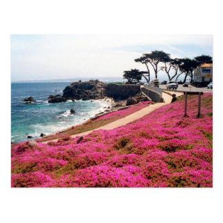 Arboleda-Monterey pacífico Calif Tarjeta Postal