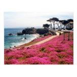 Arboleda-Monterey pacífico Calif Tarjetas Postales