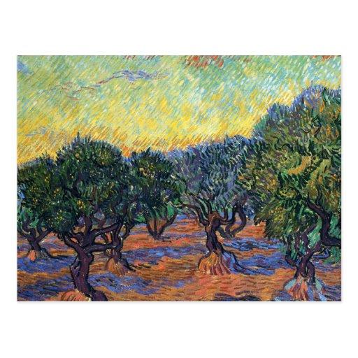 Arboleda verde oliva de Van Gogh con el cielo anar Postal