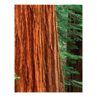 Arboleda Yosemite de Mariposa de la secoya gigante Plantillas De Membrete