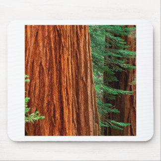 Arboleda Yosemite de Mariposa de la secoya gigante Tapetes De Ratón