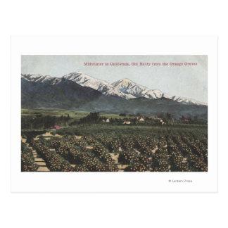 Arboledas anaranjadas con Baldy viejo Mt en Postales
