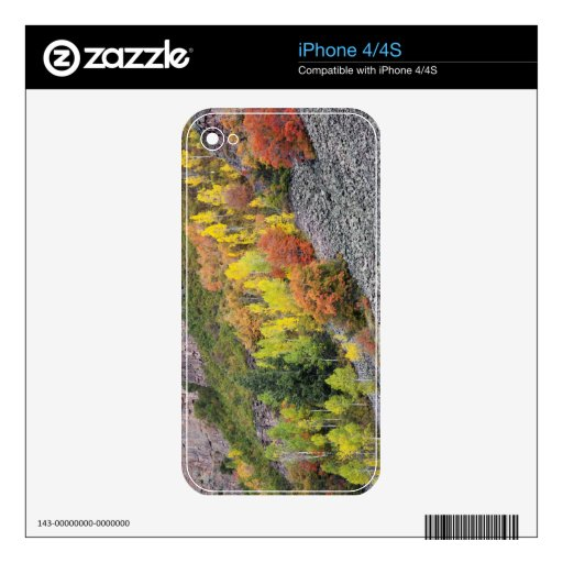 Árboles 10 del río y del álamo temblón de Provo Calcomanía Para iPhone 4S