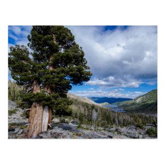 Árboles 2 del enebro y del árbol de hoja perenne tarjetas postales