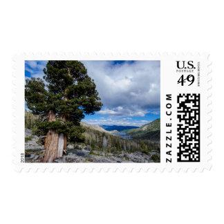 Árboles 2 del enebro y del árbol de hoja perenne timbres postales