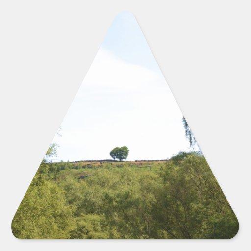 Árboles aislados en el Ridge Colcomanias De Triangulo
