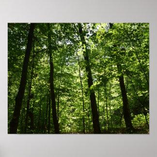 Árboles altos en naturaleza poster