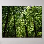 Árboles altos en naturaleza póster