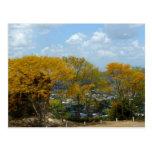 Árboles amarillos de Poui en la colina de San Postal